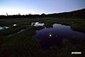 月の神仙沼湿原