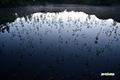 陽の出前の神仙沼