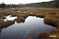 湿原の陽の出