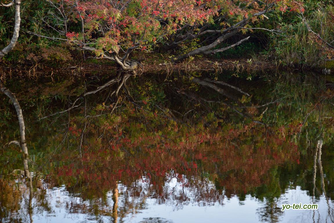 池塘の紅葉