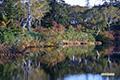 神仙沼の紅葉