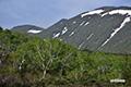 新緑とシャクナゲ岳