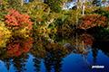 紅葉進む神仙沼湿原