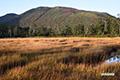 秋色の神仙沼湿原