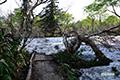 残雪の木道