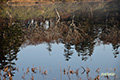 晩秋の神仙沼