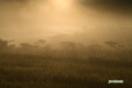 霧の神仙沼湿原