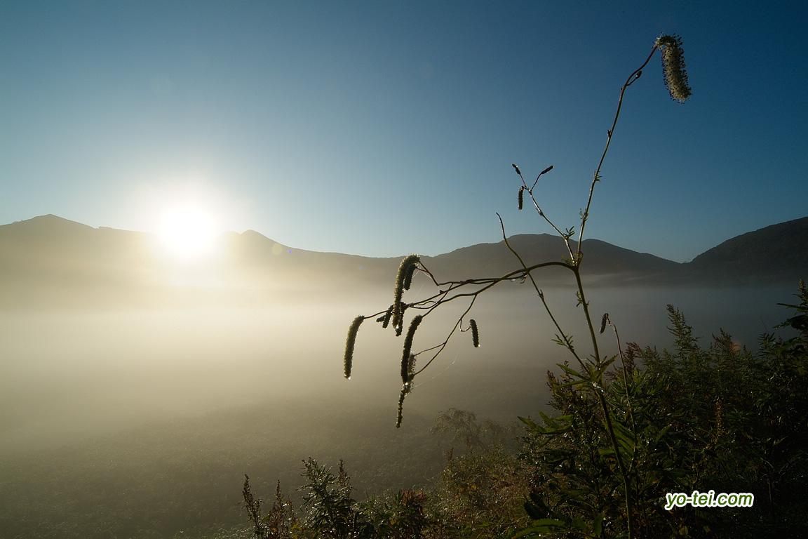 大谷地の朝・ナガボノシロワレモコウ