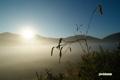 朝日を浴びる霧の大谷地・ナガボノシロワレモコウ