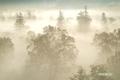 朝日を浴びる霧の大谷地