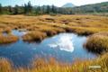 秋色深まる神仙沼湿原
