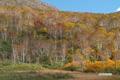 大湯沼付近の紅葉