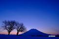 サクランボの木と羊蹄山~日の出前