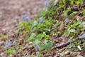 遊歩道脇に咲く花等