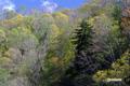 湖畔の木々