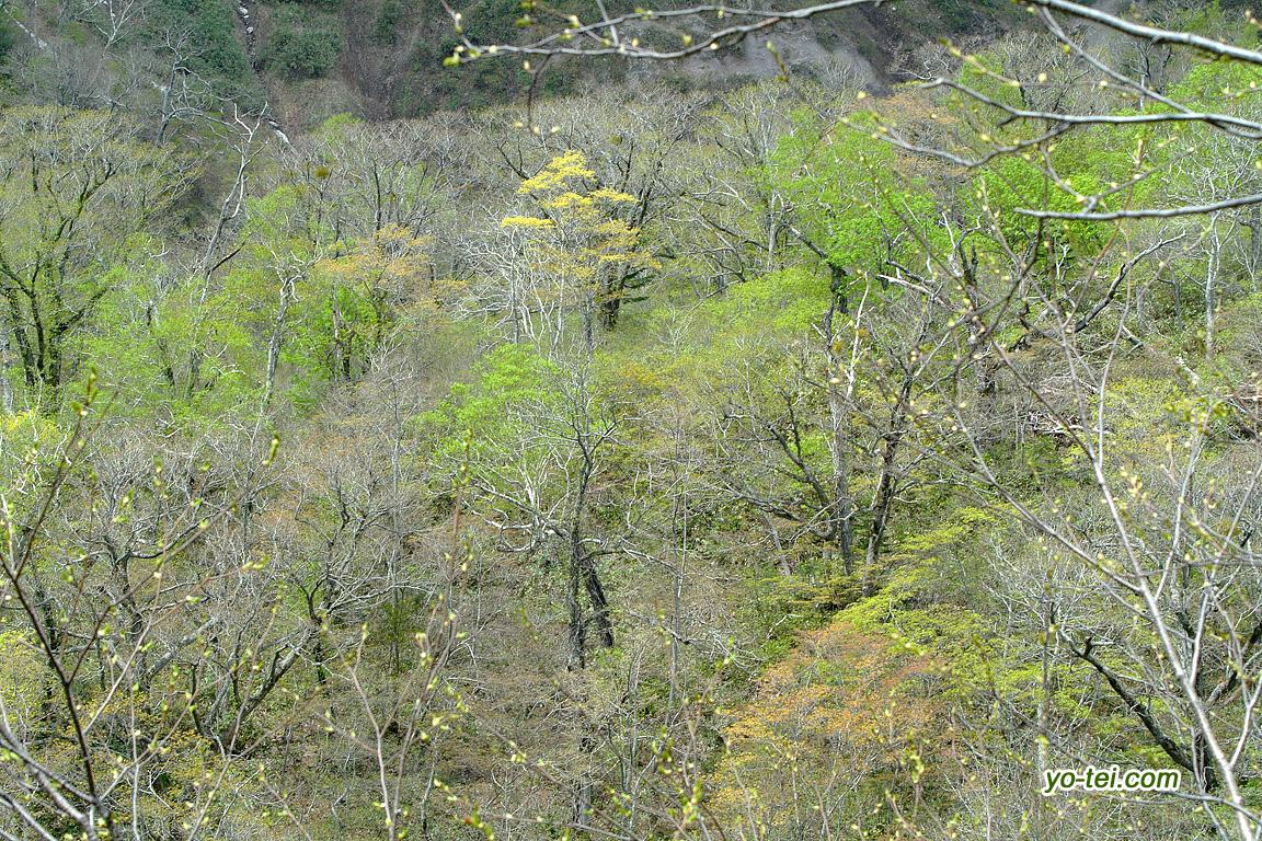 新緑と春紅葉