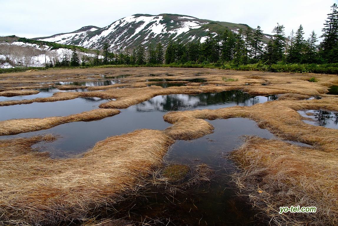 完全に雪の融けた神仙沼湿原