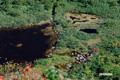 シャクナゲ沼遠望