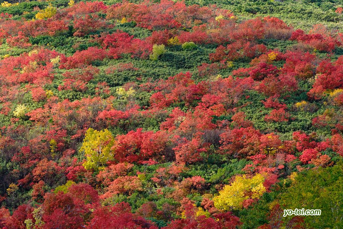 紅葉~イワオヌプリ西斜面
