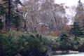 新雪の神仙沼
