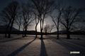 月明かりの樹影