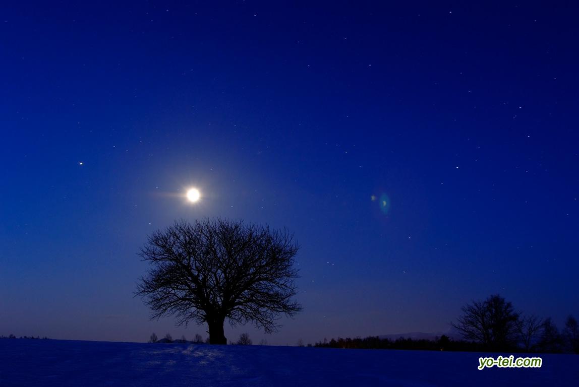 月とサクランボの木