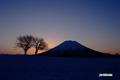 サクランボの木と羊蹄山~朝焼け