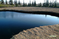 早朝の湿原~5