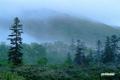 雲が通りすぎる湿原周辺