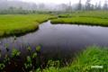早朝の湿原~1