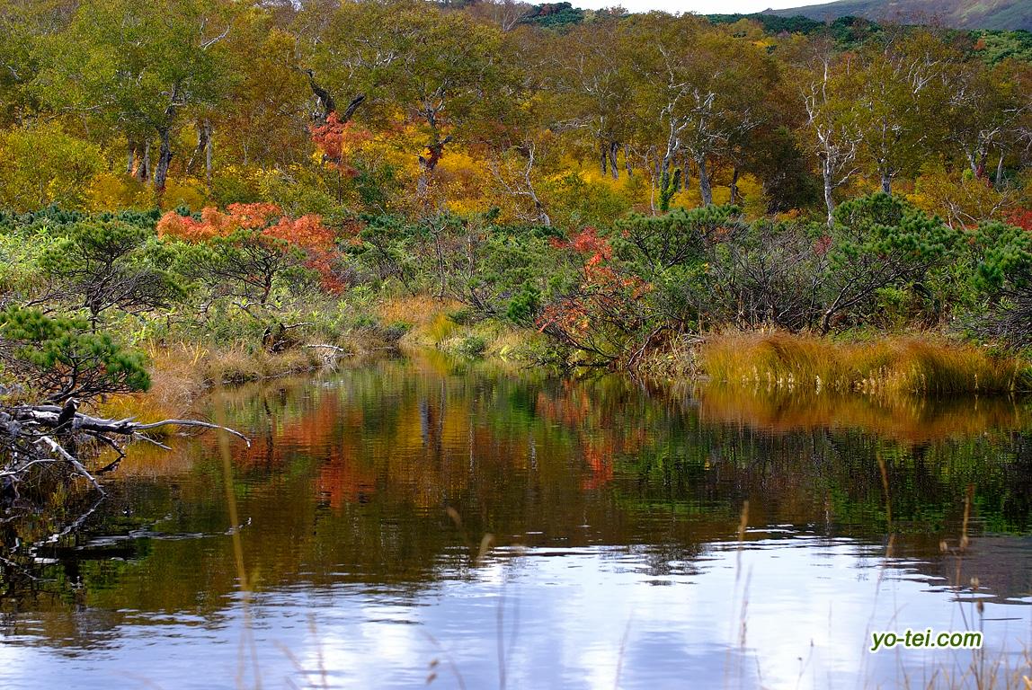 池塘と湿原