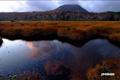 日が射す前の湿原