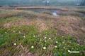 chinguruma20050619dscf4911_2m