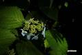 ezoajisai20050806_2dscf6383_2m