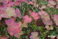 horomuiichigo20050910_3dscf0993_2m
