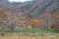 kagaminuma20051023_2dscf7779_2m