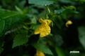 kitsurifune20050910_2dscf6779_2m