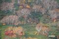 nisekoannupuri20051023_2dscf7797_2m