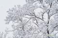 snowtree20051120_3dscf2000_3m