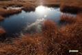 晩秋の湿原
