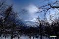 林間の羊蹄山