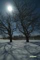サクランボの木と月