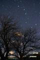 サクランボの木と北斗七星