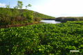 湿原~パンケメンクナイ川源流部