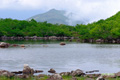シャクナゲ沼と目国内岳