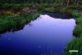 池塘の残月とゼンテイカ(エゾカンゾウ)