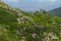 山頂近くの岩塊と倶知安町遠望