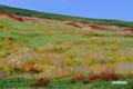 パンケメクンナイ湿原付近の紅葉