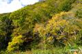 コックリ湖~登山道近辺の紅葉