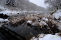 初冬の尻別川